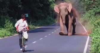 Maman éléphant bloque la circulation pendant quelques minutes. Peu de temps après, on comprend pourquoi...