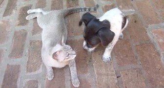 An orphaned dog and a new mother cat -- what they do defies the laws of nature!