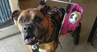 Scampato all'eutanasia, inizia una nuova vita grazie a una compagna speciale