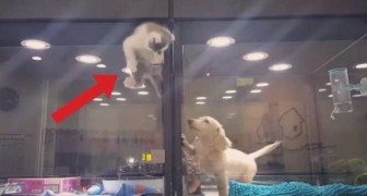 It looks like a kitten is escaping from its box --- the truth is totally unexpected!