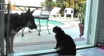 Tu ne passeras pas, monsieur le chien