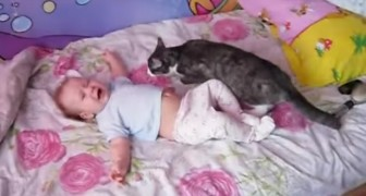 A baby is crying desperately --- Just see what the cat does!