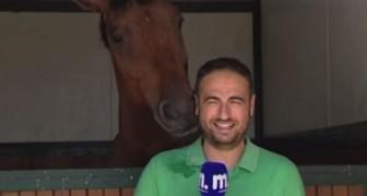 El caballo molesta con insistencia la registracion: la reaccion del periodista les arrancara una sonrisa