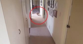 Als zijn baasje het woord 'douche' zegt, is de reactie van deze hond HILARISCH!