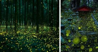 Cette forêt japonaise offre chaque année un spectacle naturel de conte de fées : voici les photos