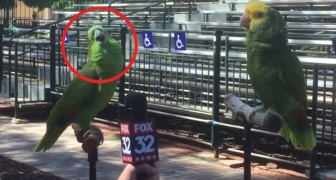 A journalist interviews two parrots  --- the result is very impressive!