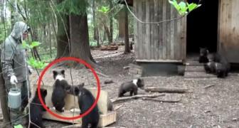 Die Freiwilligen eines Tierheims füttern Bären-Waise: So läuft es jeden Tag!