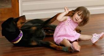 Il loro dobermann aggredisce la figlia piccola: quando scoprono il motivo restano senza parole