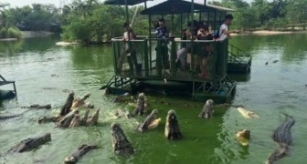 Turisti sorridenti circondati da coccodrilli affamati: ecco le immagini che hanno scosso migliaia di persone