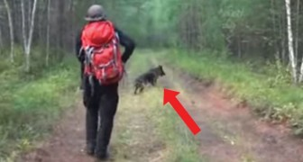 Una niña se pierde en el bosque por 12 dias: cuando encuentran a su perro, deciden de seguirlo...