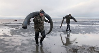 A caccia di mammut: la nuova frontiera del commercio di avorio che non implica lo sterminio di elefanti