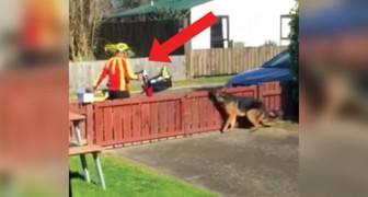 Il filme secrètement l'arrivée du facteur : voila ce qu'il fait tous les jours avec le chien ... adorable!