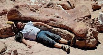Un agriculteur trouve des os gigantesques et découvre la plus grosse créature qui ait existé