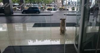 Ce chien errant attend chaque jour une femme devant l'hôtel: son plan est... infaillible!