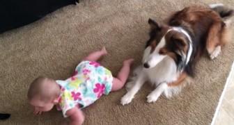 O bebê não consegue engatinhar, mas depois que o cachorro a ensina... tudo muda!