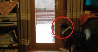 Chiede al cane di far entrare il gatto in casa... lui esegue ALLA PERFEZIONE!
