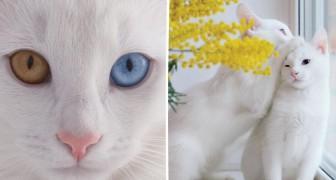 Questa gatta è incantevole, ma aspettate di vederla insieme a sua sorella...