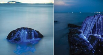 Lucciole di mare: ecco il magico effetto luminoso prodotto da un minuscolo animale