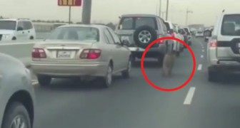 Estos automovilistas asisten en la calle a una escena IRREAL...y tristisima!