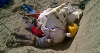 Er Is Een Volledig T-Rex Skelet Gevonden, Zijn Hoofd Geeft Je Een Idee Van Hoe Angstaanjagend Groot Hij Was