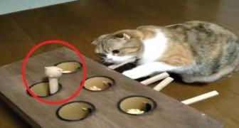 Spinge la leva e sbuca una talpa: le reazioni del gatto vi faranno piegare dalle risate