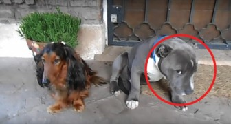 Qualcuno ha mangiato una scarpa: la reazione dei cani all'interrogatorio è DA VEDERE!