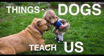 Ce que nos fidèles amis ont à nous apprendre