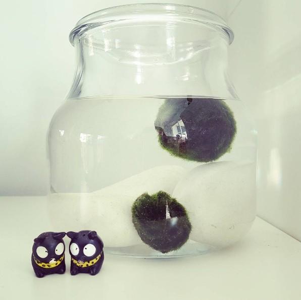 10 merkw rdige und sch ne zimmerpflanzen die ihr sofort haben wollt. Black Bedroom Furniture Sets. Home Design Ideas