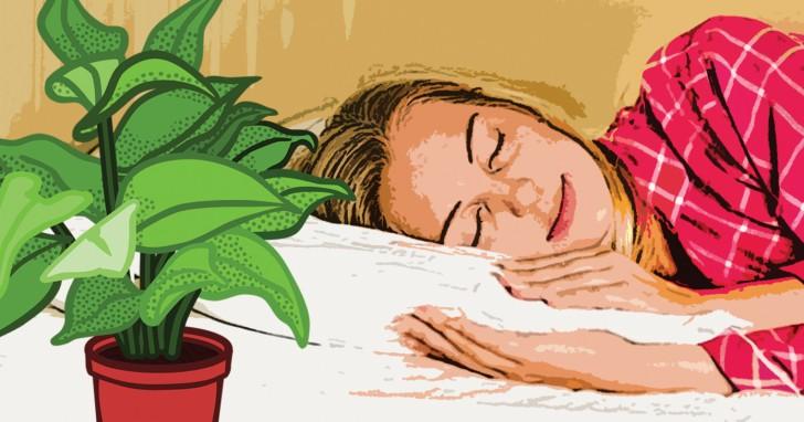9 pflanzen die du zu hause haben solltest um jede nacht gut zu schlafen. Black Bedroom Furniture Sets. Home Design Ideas