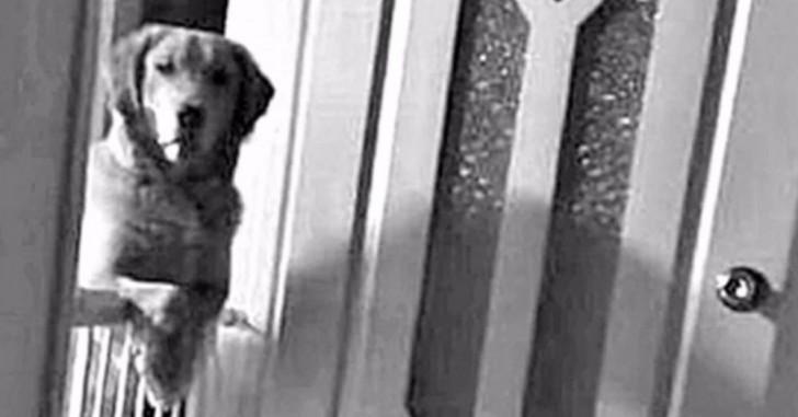 Il cane che adottano al canile passa notti intere a - Portare il cane al canile ...