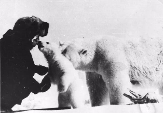 rencontre avec un ours