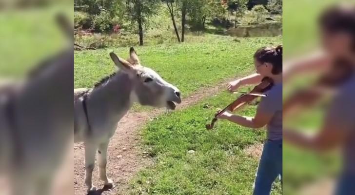 Ella comienza a tocar el violin pero no se espera ESTA reaccion del asno!