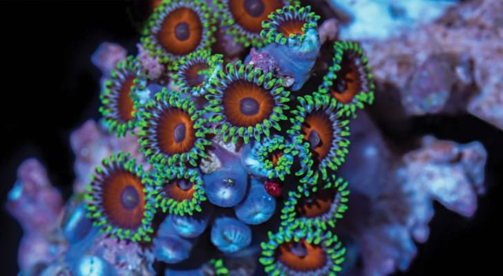 25.000 foto's die in 1 jaar werden genomen:  de pracht van het koraal in deze timelapse is VERBLUFFEND!
