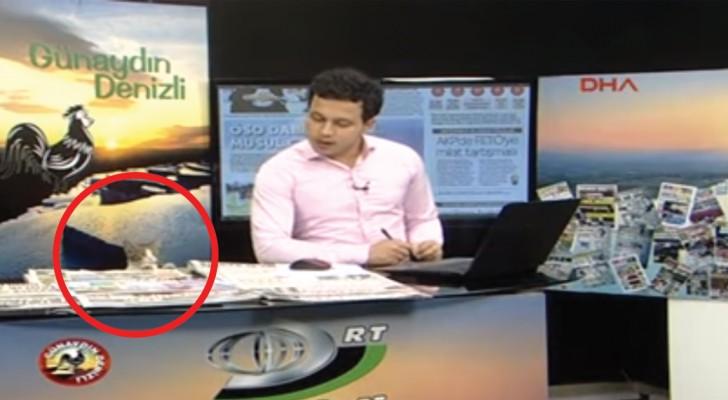 Pendant le journal télé, un intrus entre sur le plateau: le journaliste réagit comme un vrai pro!