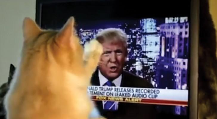 Donald Trump apparaît à la télévision et la réaction du chat est ... IMMEDIATE!