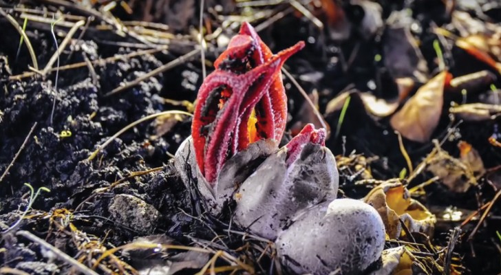 Watch this unusual fungus hatch and grow ...