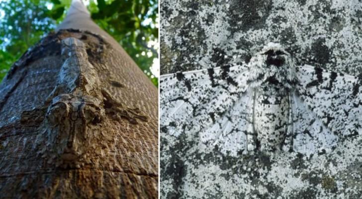Sopravvivere nella natura: 20 animali maghi della mimetizzazione che riuscirete a vedere a stento