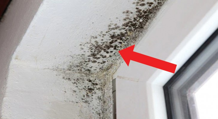 How to ELIMINATE mold from your house!