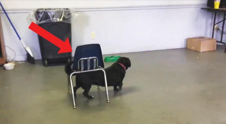 Este cãozinho é muito mais inteligente de quanto parece: não o julgue pela aparência!