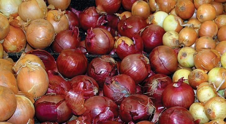 Descubre todos los beneficios de la cebolla y cual tipo deben usar segun la receta