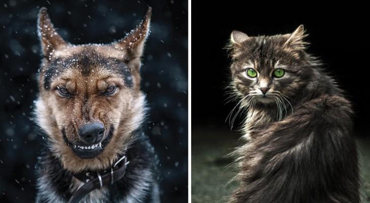 Gira per la città e fotografa gli animali: ecco il bellissimo risultato della sua opera