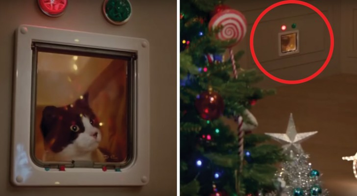 What do CATS see in Christmas ornaments?