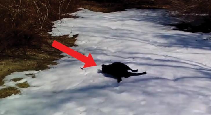 A giocare sulla neve: il cane non contiene l'entusiasmo e reagisce così