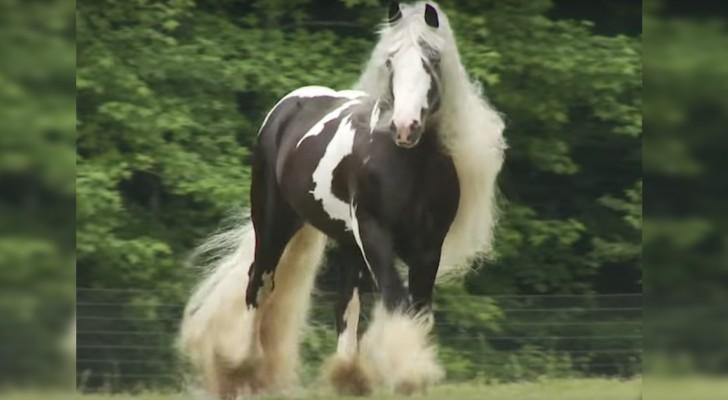 Manto pesado y melena de record: la belleza de este caballo nos deja sorprendidos