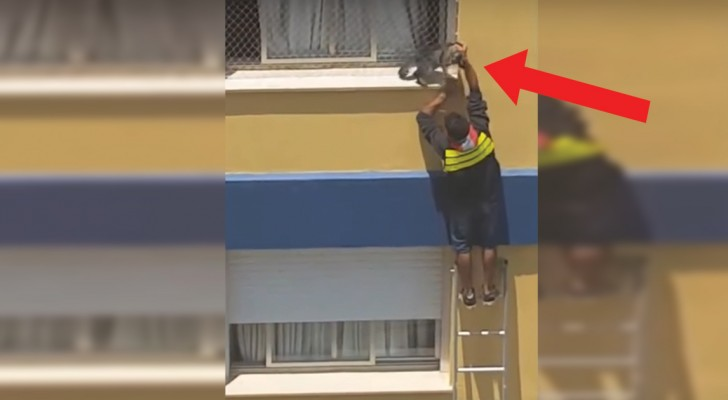 Heroic man risks falling to save a cat!