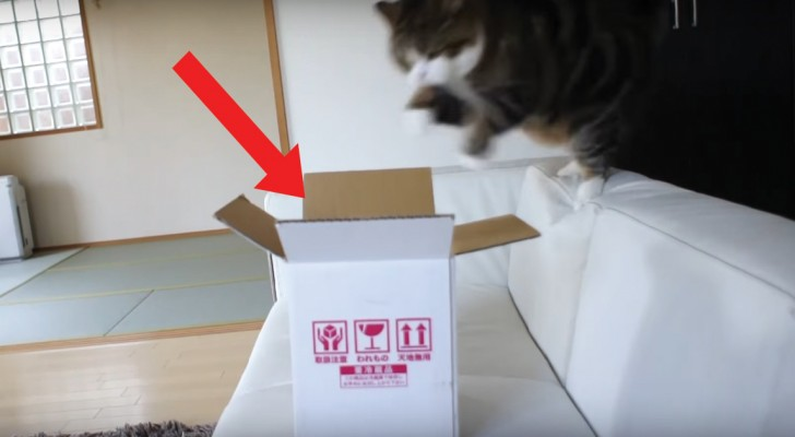 Can this cat fit inside this box?