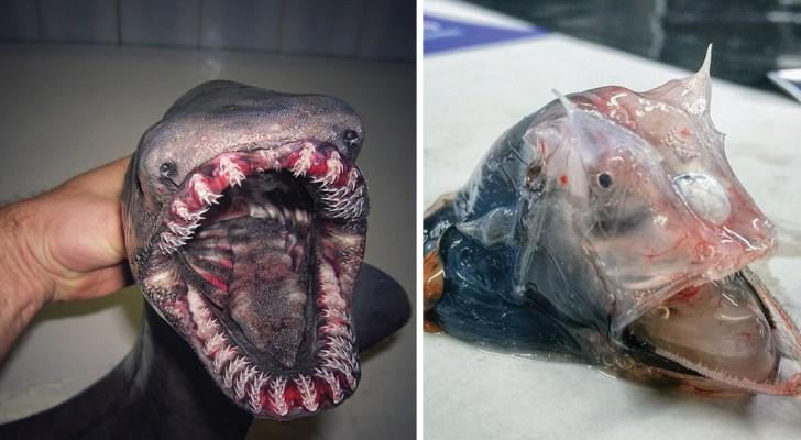 Ce pêcheur a photographié les créatures les plus bizarres retrouvées dans ses filets: le résultat est digne d'un film d'horreur