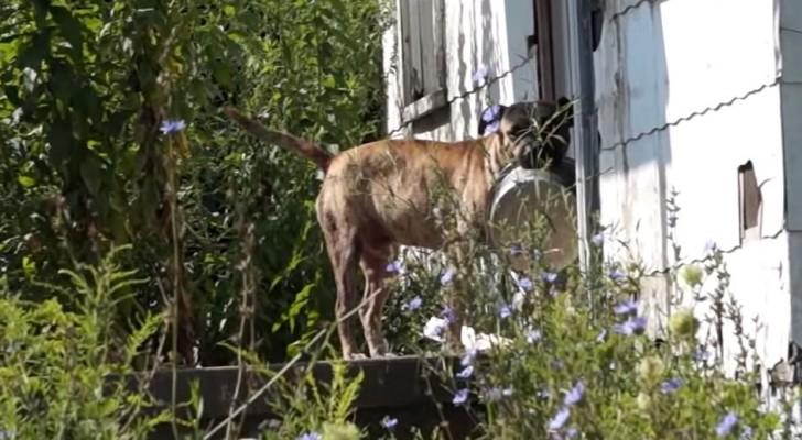 Ce chien abandonné amène avec lui la gamelle dans l'espoir que quelqu'un lui donne à manger