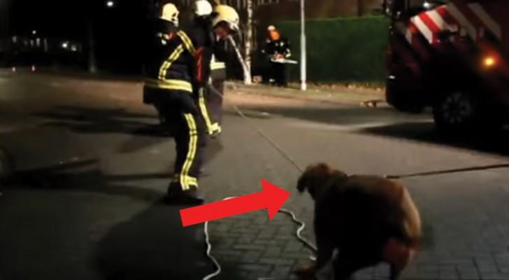 Die Feuerwehrmänner haben Schwierigkeiten, den Baum zu fällen: seht wer zu Hilfe kommt