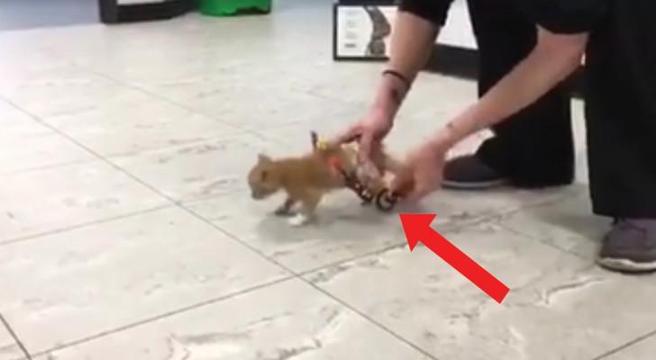 La gattina torna a muoversi grazie a questa speciale costruzione: la sua gioia è palese!